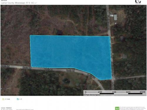 10 Acres For Sale Home Site Purvis : Purvis : Lamar County : Mississippi