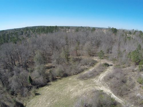 Hunting & Timberland - Qdm Bucks : Butler : Taylor County : Georgia