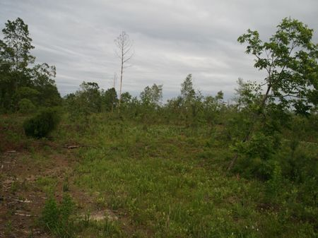 130 Acres : Reynolds : Macon County : Georgia