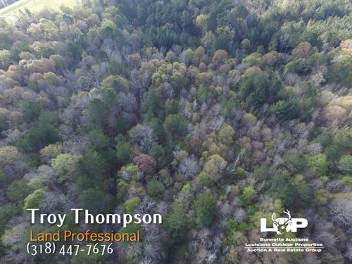 20 Acres Of Timberland : Trout : La Salle Parish : Louisiana