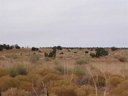 41 Acres Pinon Ranches Neartrinidad : Trinidad : Las Animas County : Colorado
