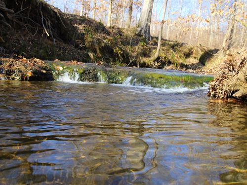 84 Ac Ideal Hunting Property : Summertown : Lewis County : Tennessee