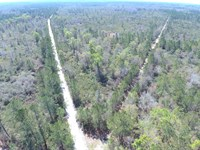 20 Acres In The Middle Of 400,000 : Perry : Taylor County : Florida