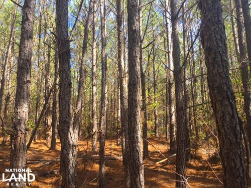 Jones Road 3.5 Acre Homesite : Kershaw : South Carolina