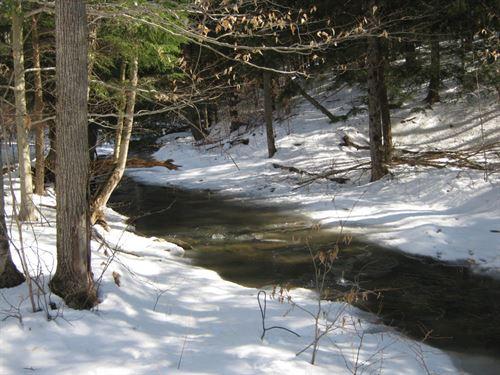20 Acres Watkins Glen Ny Forest : Orange : Schuyler County : New York