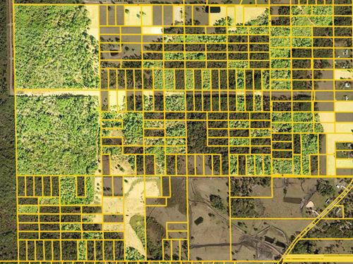 Agricultural Opportunity : Winter Haven : Polk County : Florida