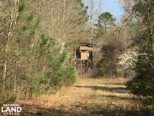 175+/- Acre Timberland & Hunting Pr : Rolla : Hot Spring County : Arkansas