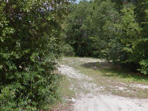 Marion County, Floirda $11,000 Neg : Ocala : Marion County : Florida