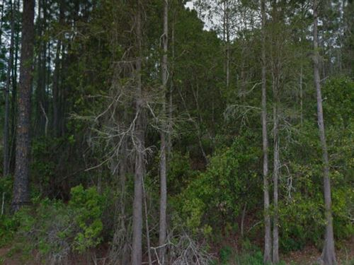 Polk County, Florida $13,500 Neg : Polk City : Polk County : Florida