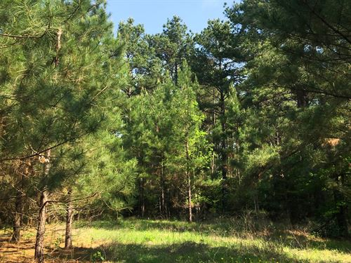 43 Ac Walker Loop : Huntsville : Walker County : Texas