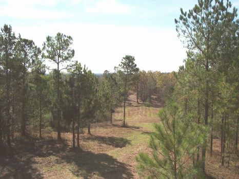 107 Acres Hunting/Timberland : Goodwater : Coosa County : Alabama