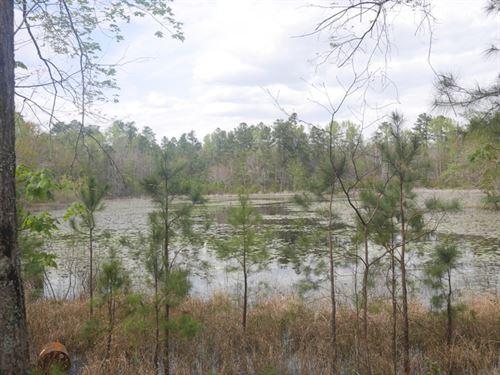 Hwy 25- 28 Acres : Millen : Jenkins County : Georgia