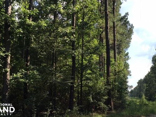 Lake Mike Conner Rd. Timber Investm : Collins : Covington County : Mississippi