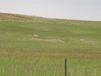 Come Build Your Dream Home : Sundance : Crook County : Wyoming