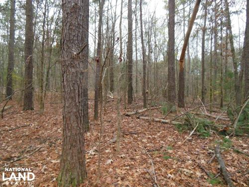 60 Acre Hunting Refuge : Pickens : Madison County : Mississippi