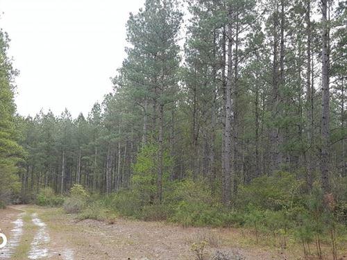 Immediate Return Timber Tract Pende : Burgaw : Pender County : North Carolina