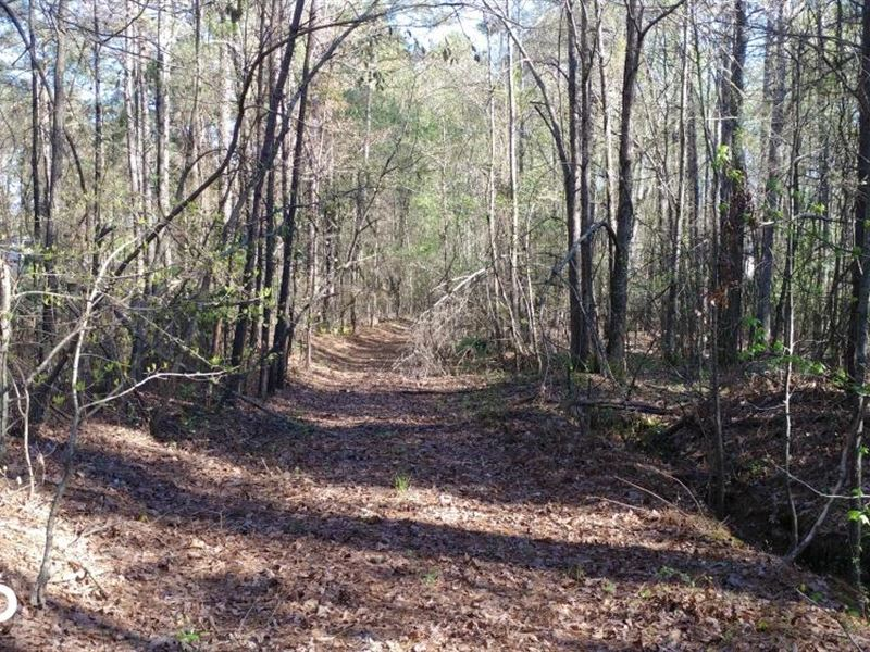 Cane Creek Timber And Hunting Tract : Little Rock : Pulaski County : Arkansas