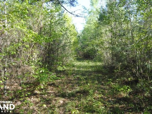 Pine Top Road Investment Tract : Belmont : Sumter County : Alabama