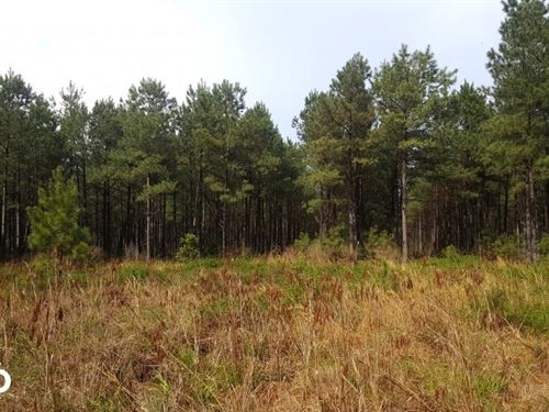 Pender County Timber Investment Tra : Burgaw : Pender County : North Carolina