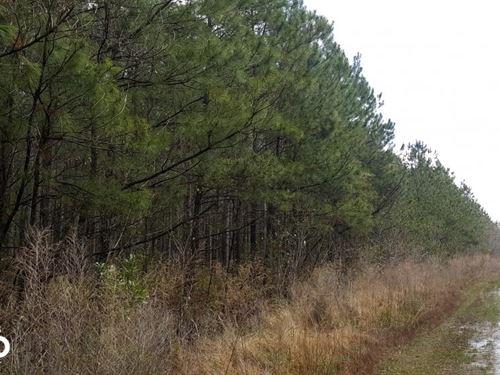 I-40 Mature Timber Investment Tract : Burgaw : Pender County : North Carolina