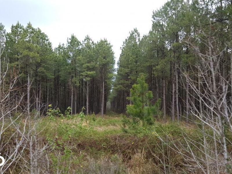 Stag Park Hunting Land And Timber : Burgaw : Pender County : North Carolina