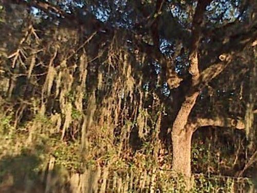 Polk County, Florida - $10,500 Neg : Winter Haven : Polk County : Florida