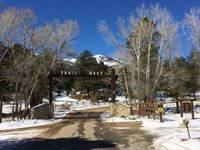5576503 Nicely Treed Lot : Buena Vista : Chaffee County : Colorado