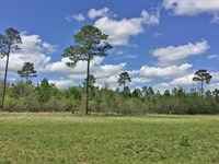 Elsanor Tract On Us Hwy 90 : Robertsdale : Baldwin County : Alabama