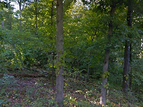 Beautiful Wooded Property : Williford : Sharp County : Arkansas