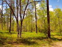 160 Acres Of Prime Wildlife Habitat : Tallassee : Tallapoosa County : Alabama