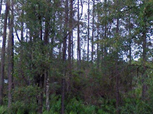 Marion, Florida $2,500 : Citra : Marion County : Florida