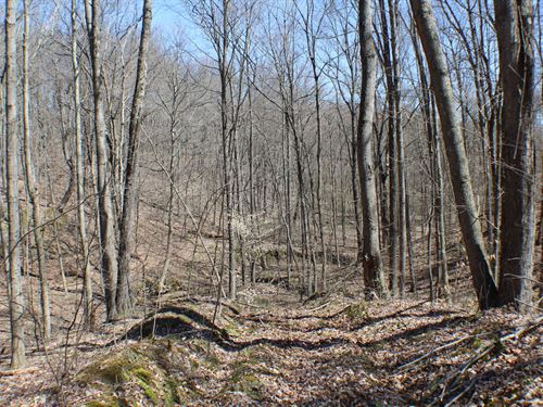 Cutler Lake Rd - 39 Acres : Blue Rock : Muskingum County : Ohio