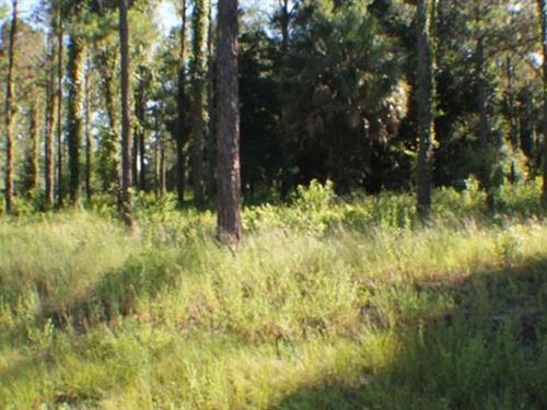 Polk County, Florida $3,995 : Polk City : Polk County : Florida