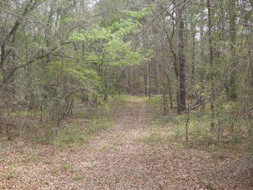Hwy 25- 73+/-Acres : Millen : Jenkins County : Georgia
