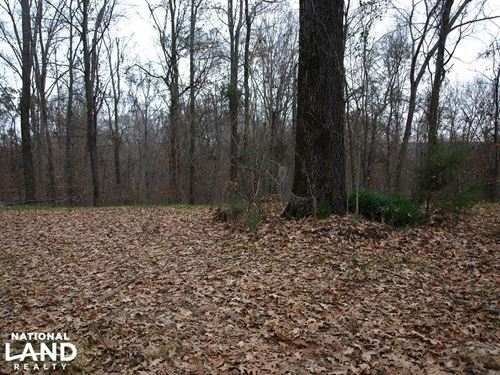 145 Acre Deer, Turkey And Timber Pr : Edwards : Hinds County : Mississippi