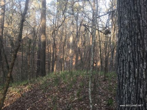 20 Ac Timberland & Hunting Adj : Sicily Island : Catahoula Parish : Louisiana