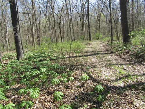 72 Ac. Prime Hunting Land Absolute : Dix : Jefferson County : Illinois