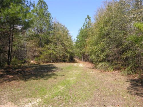 314.9 Acres Wooded, Creek : Lumpkin : Stewart County : Georgia