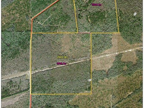 160 Acres Off Of Linscomb Road : Mauriceville : Orange County : Texas