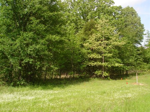 Wooded 2 Acres Ne Tx Red River Co : Detroit : Red River County : Texas