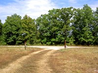 Gorgeous 40 Acre Property With Well : Cabool : Texas County : Missouri