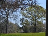 Golden Horse And Cattle Farm : Cedar Springs : Early County : Georgia