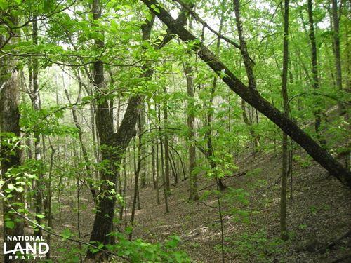 Hwy 278 Hunting, Home Site, Timber : Rockmart : Polk County : Georgia