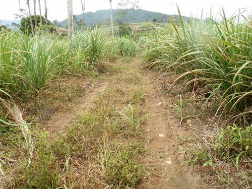 7+Ac. Level Land- All Services- Pej : Pejibaye De Cartago : Costa Rica