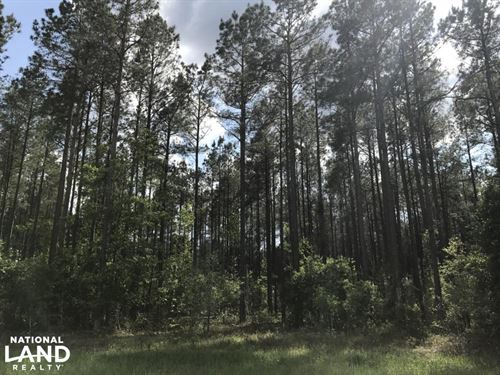Allendale Small Timber Tract : Allendale County : South Carolina