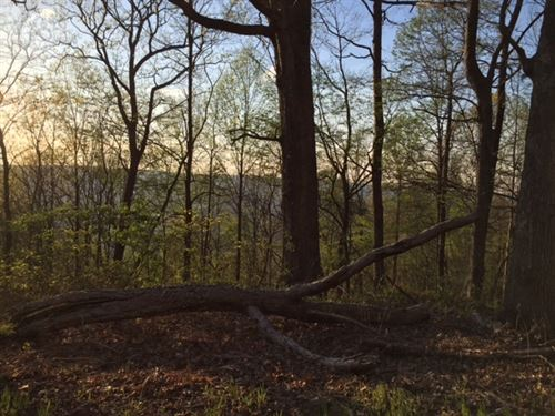 8.00+/-Acres Unrestricted/Wooded : Whitwell : Marion County : Tennessee