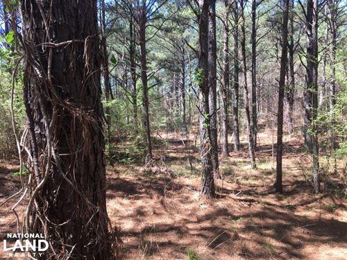 Lincoln Branch Investment : Lynn : Winston County : Alabama