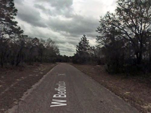 Over-Sized Residential Lot For Sale : Citrus Springs : Citrus County : Florida