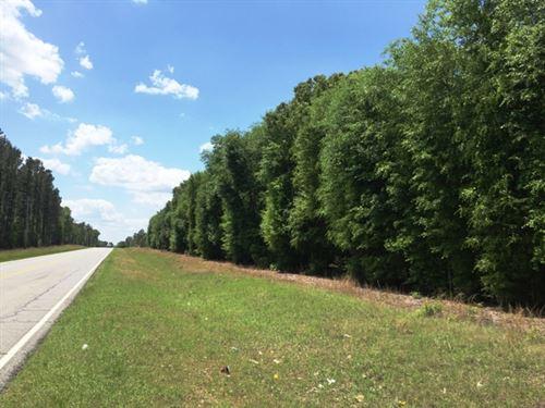 Highway 3 Tract : Springfield : Orangeburg County : South Carolina