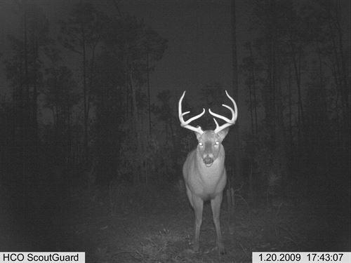Turkey Ridge Plantation : Marianna : Jackson County : Florida